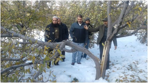 Snowfall Aftermath: Director Horticulture visits Shopian to take stock of damages
