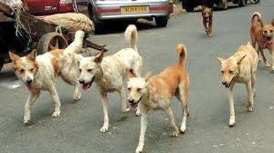 51 inured in stray dog attacks in Baramulla